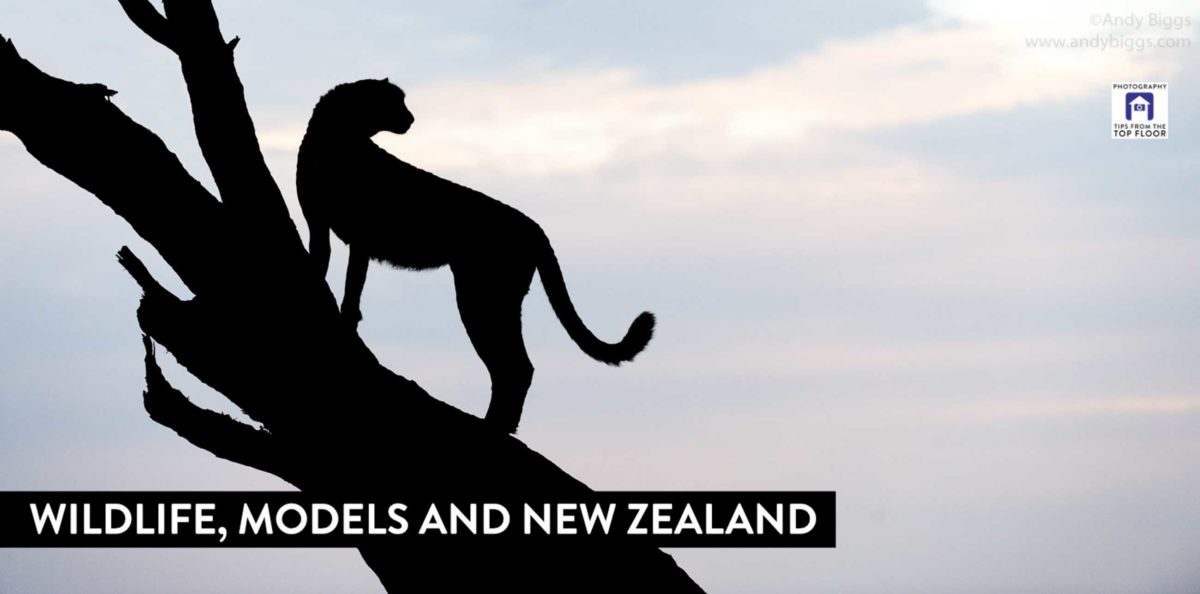 808 Wildlife, Models and New Zealand