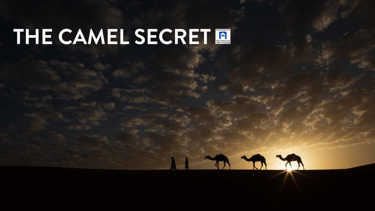 846 The Camel Secret